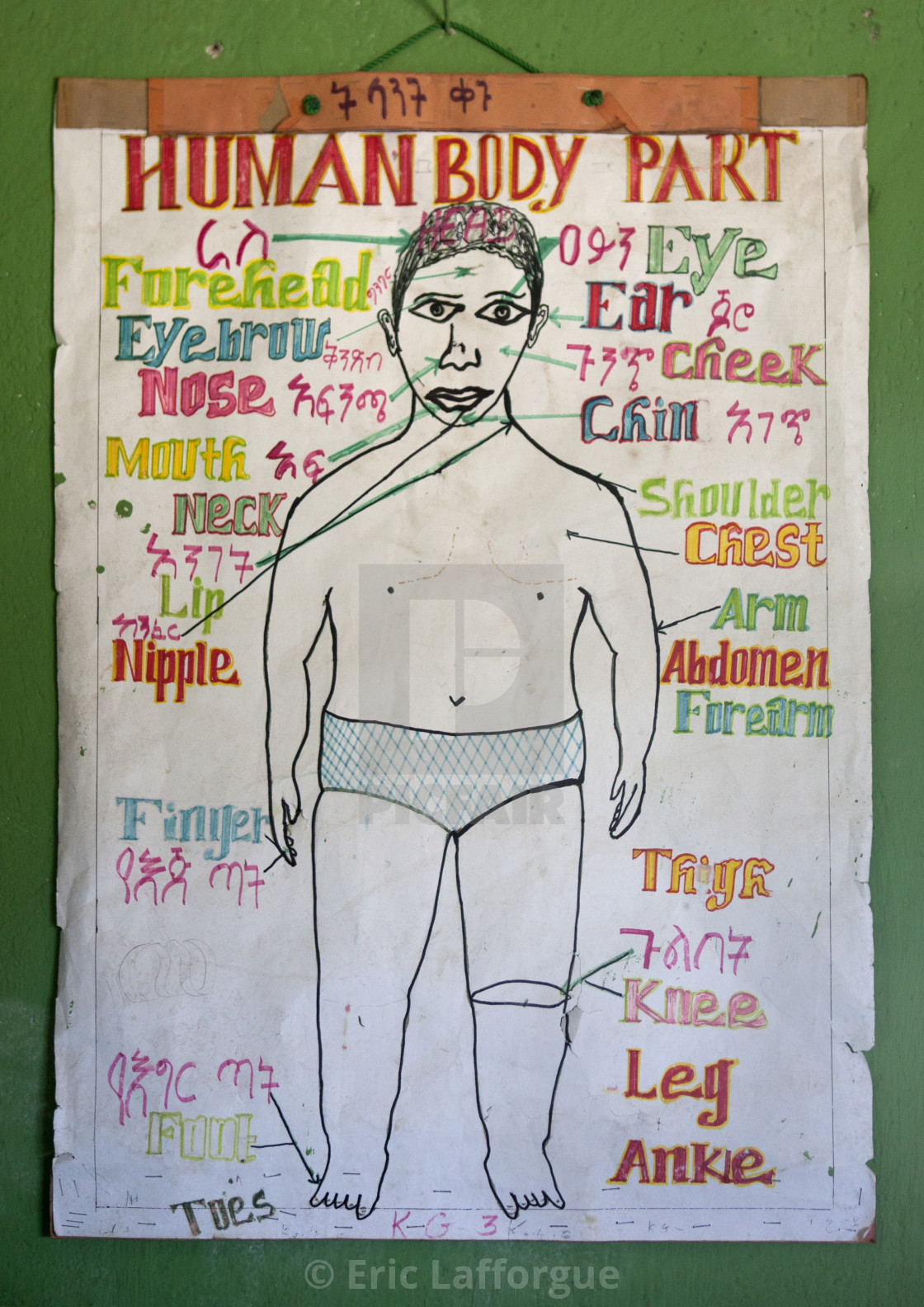 Human Body Parts Chart In Shashemene Jamaican School, Oromia Region ...