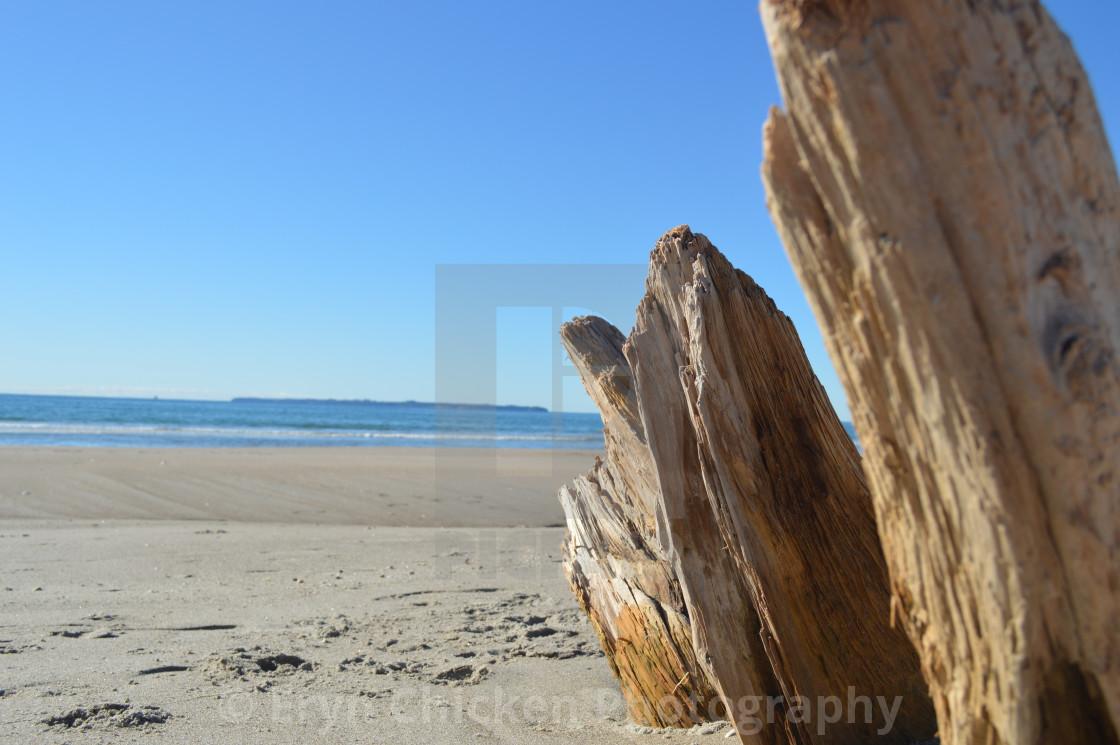 """Beach wood"" stock image"