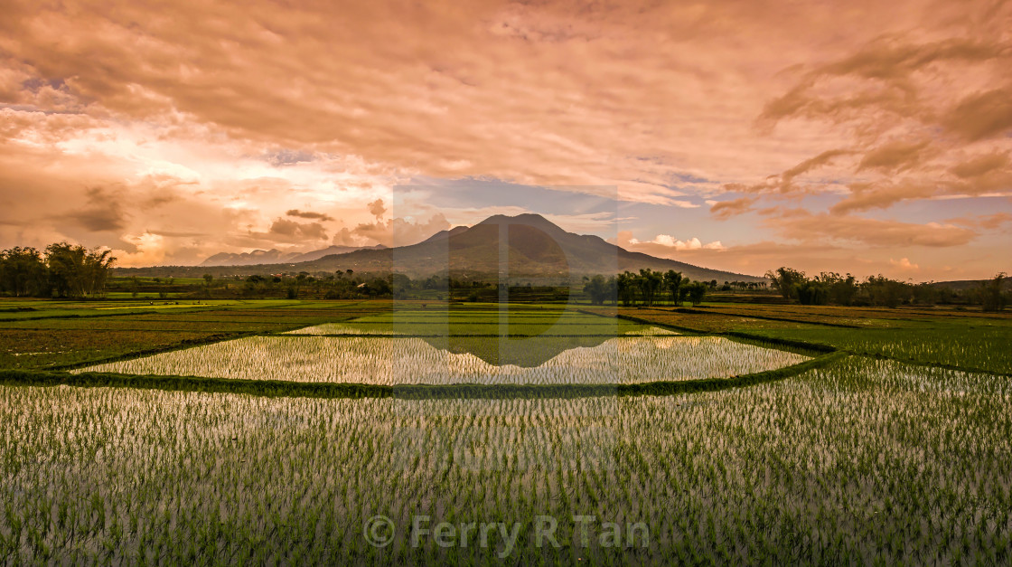 """Rice field, Flores Island, Indonesia"" stock image"