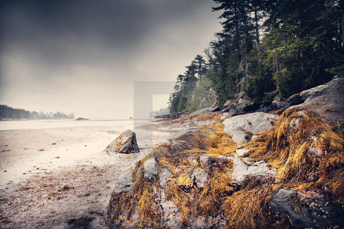 """""""Blue Hill at low tide"""" stock image"""