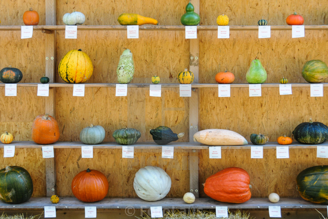 """Little Pumpkin Guide"" stock image"