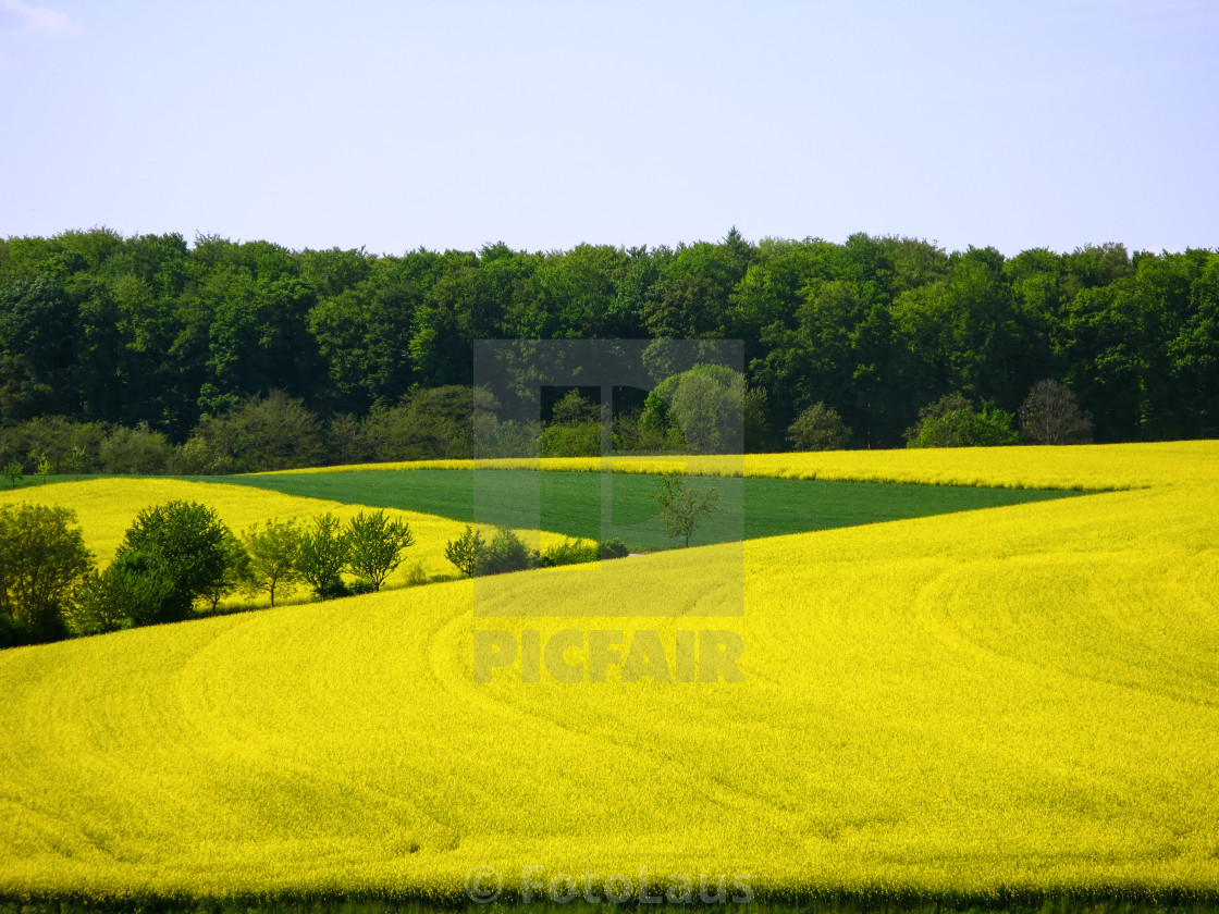 """Summerly landscape with rape field and forest in the Kraichgau, Germany"" stock image"
