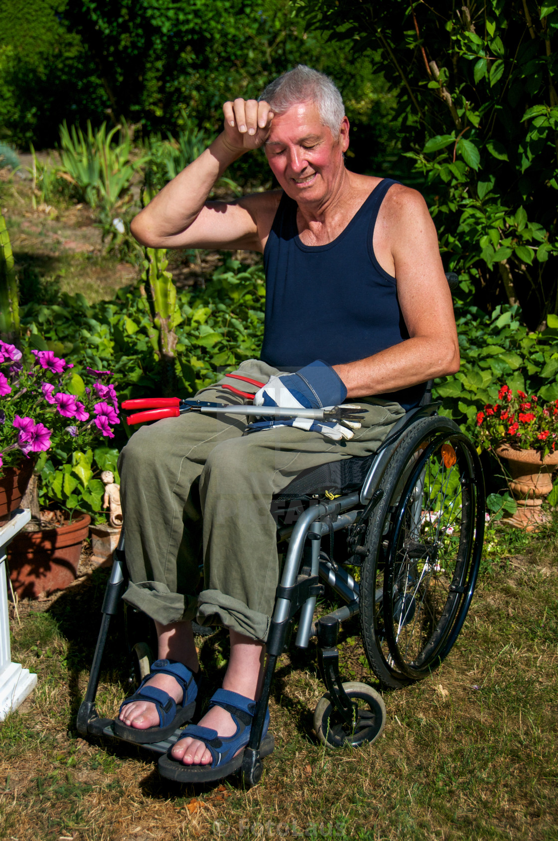 """Gardening in Wheelchair"" stock image"