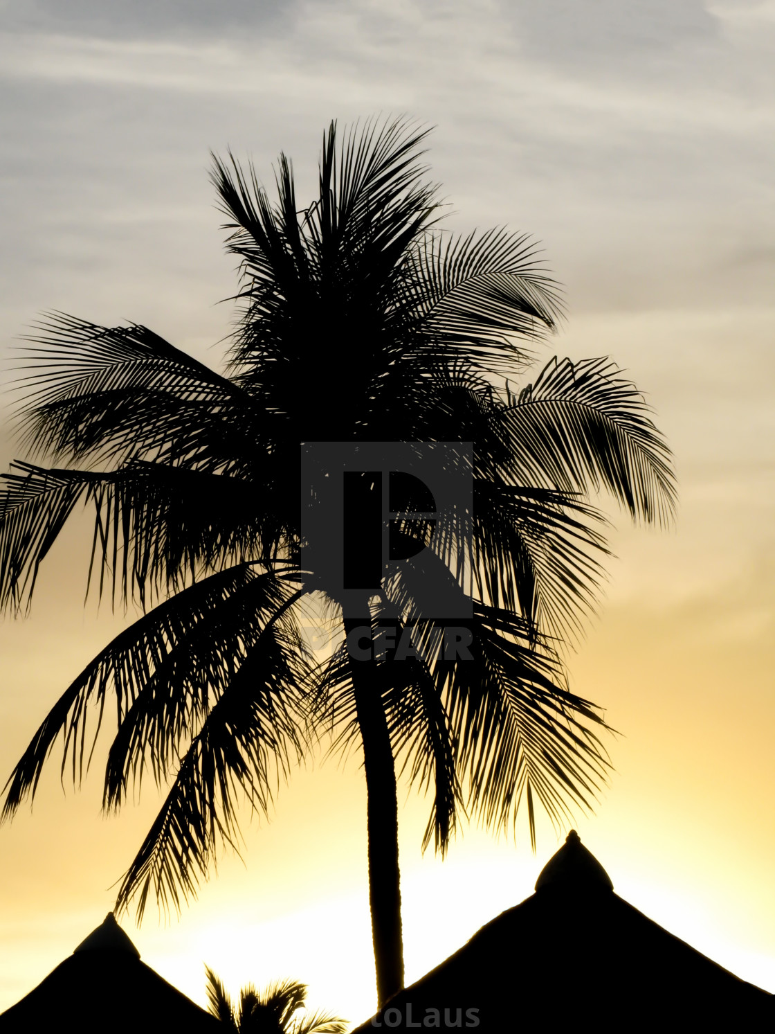 """Palm Silhouette"" stock image"