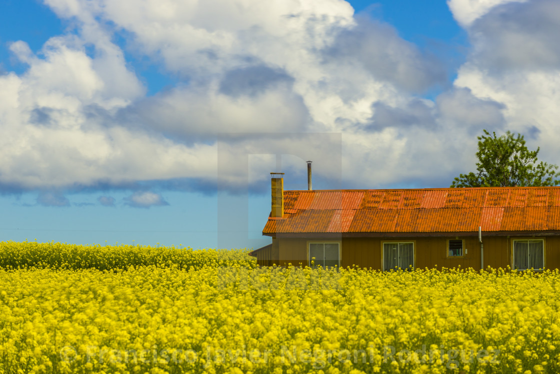 """Old house and raps plantations"" stock image"