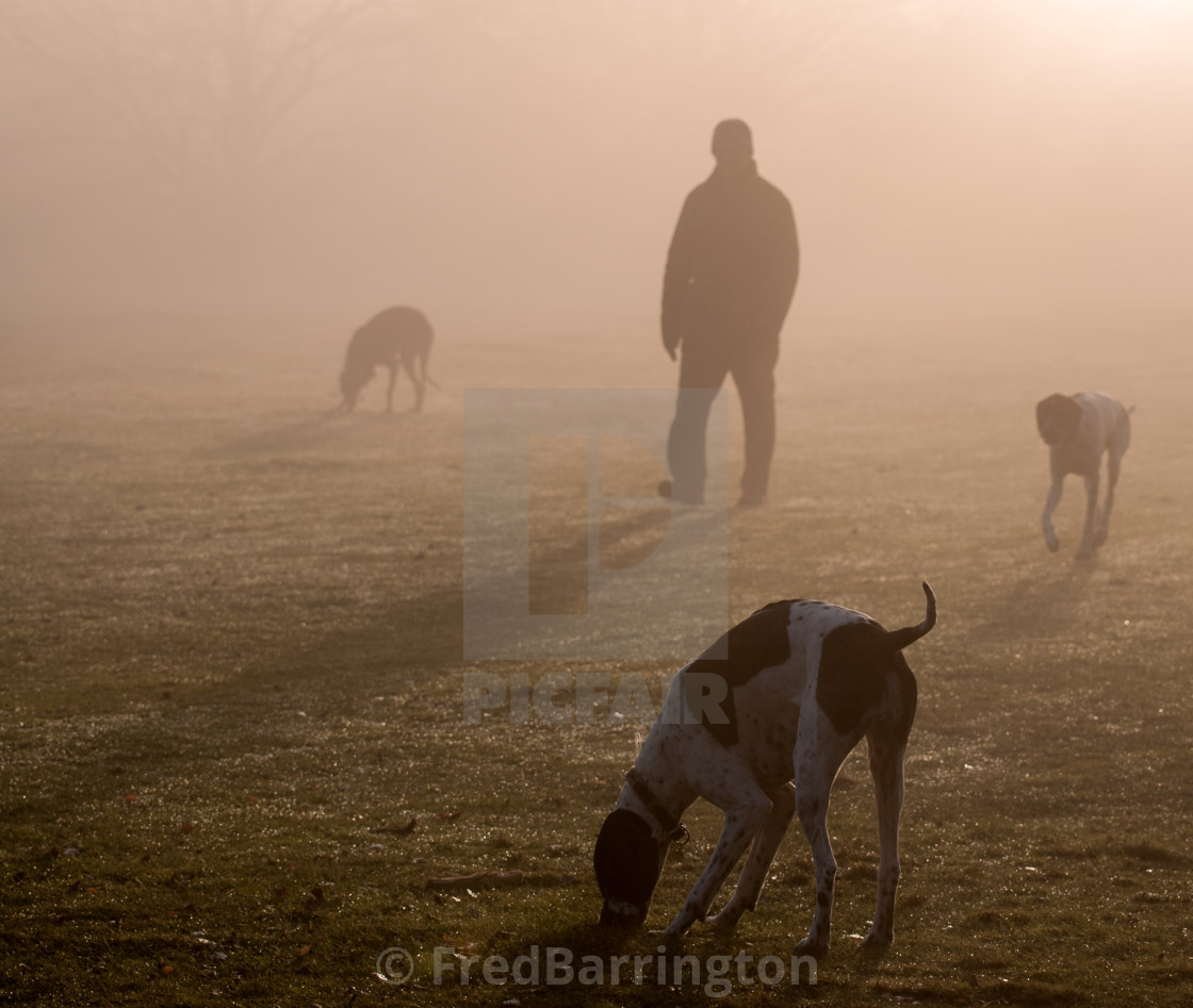 """Man and his dogs in the mist"" stock image"