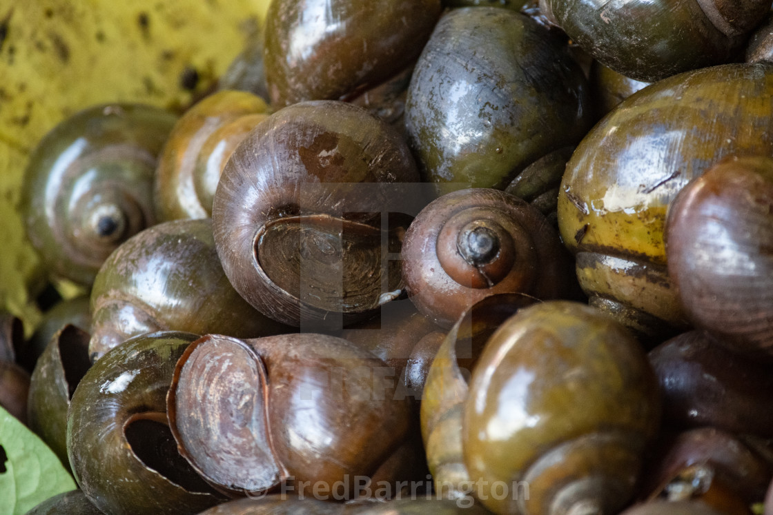 """""""Snails for sale"""" stock image"""