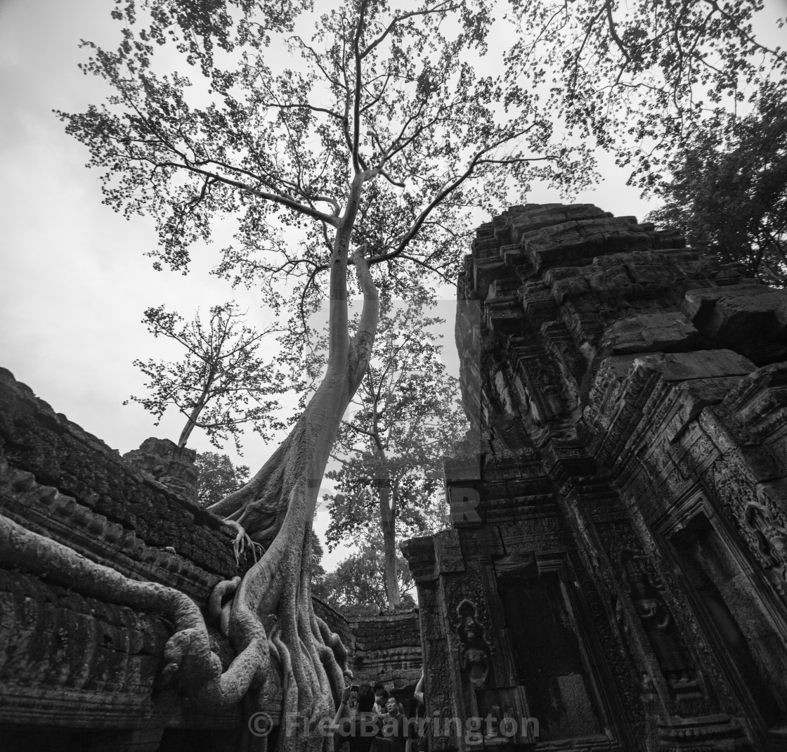 """Ta Prohm Temple"" stock image"
