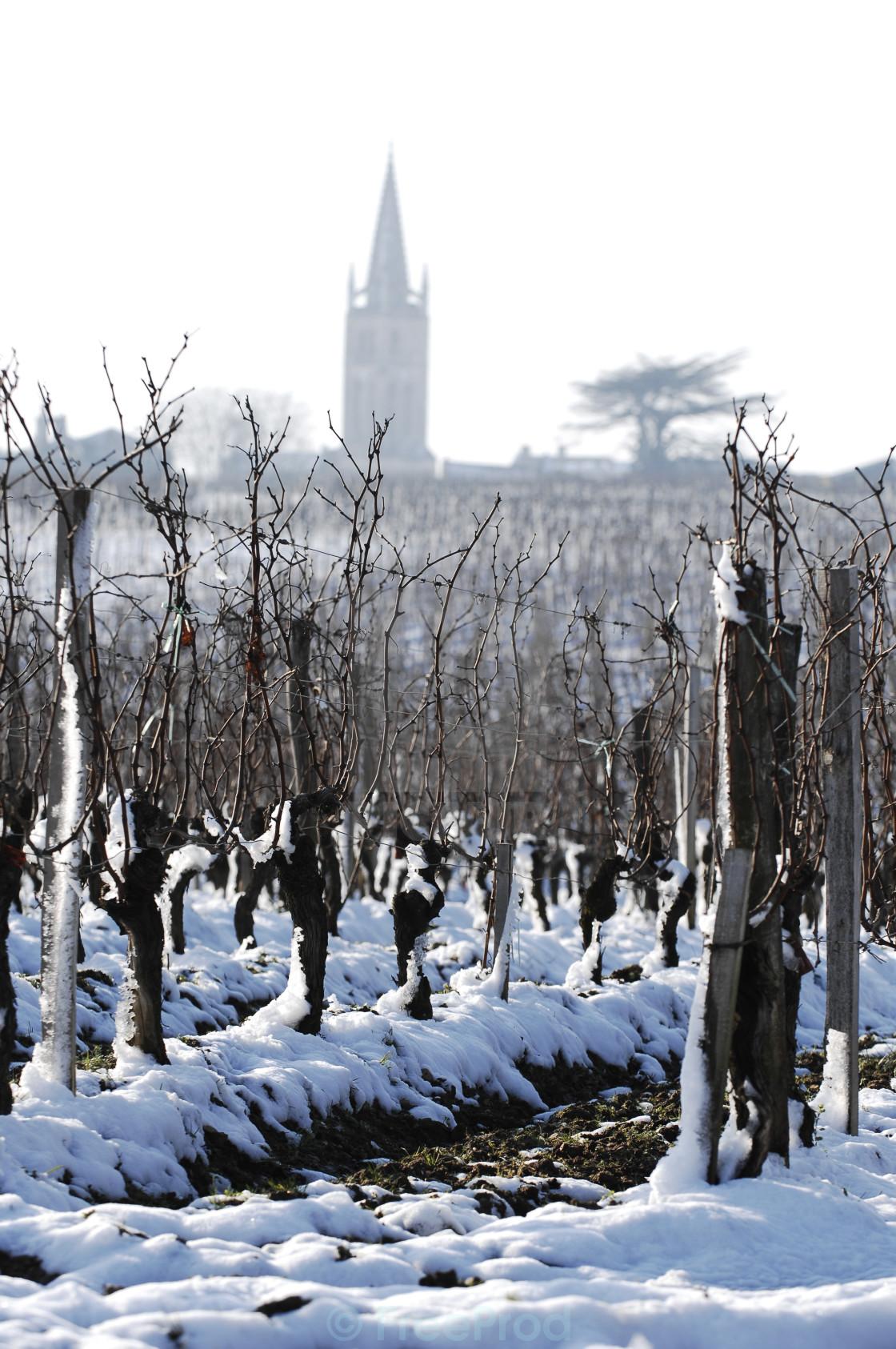 """Snow covered vineyards-Saint-Emilion"" stock image"