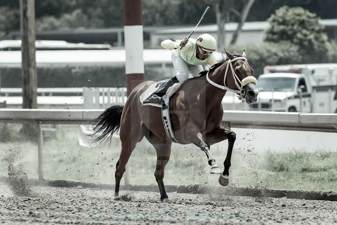 """""""A jockey on horse back on a race track in mexico city"""" stock image"""