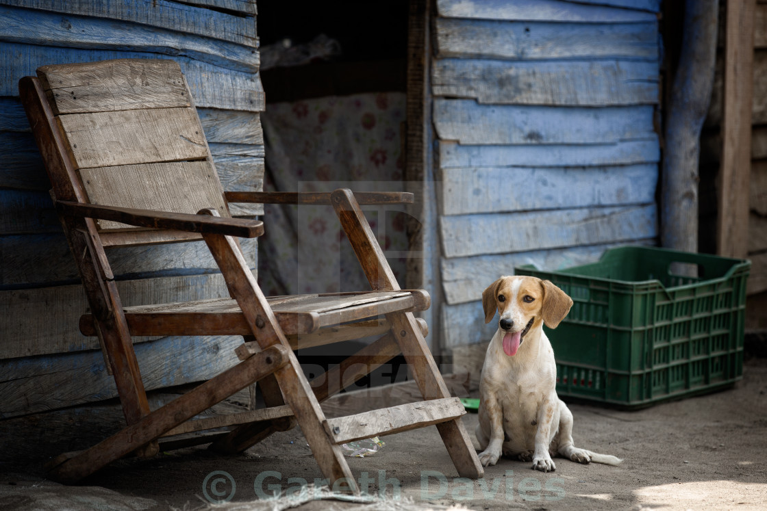 """A dog sits by a wooden chair next to a slum in Barranquilla, Colombia"" stock image"