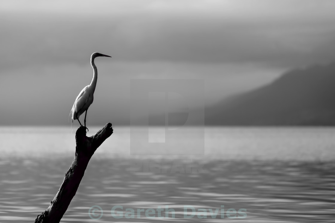"""Bird sitting on a branch at the edge of a lake"" stock image"