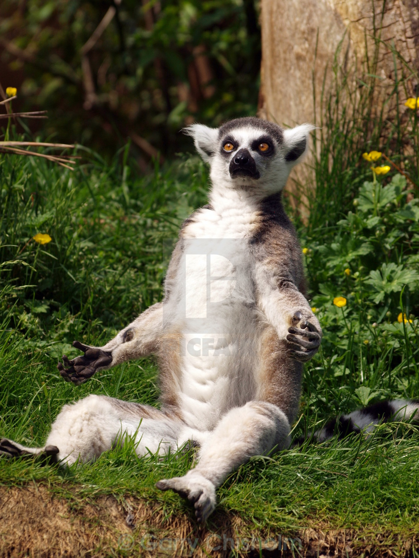 """Sunbathing"" stock image"