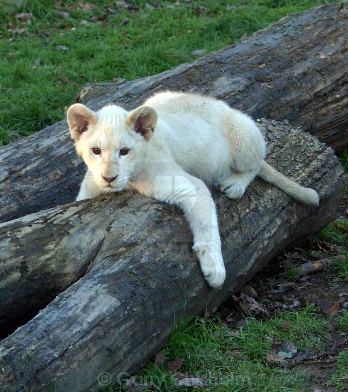 """Tree cub"" stock image"