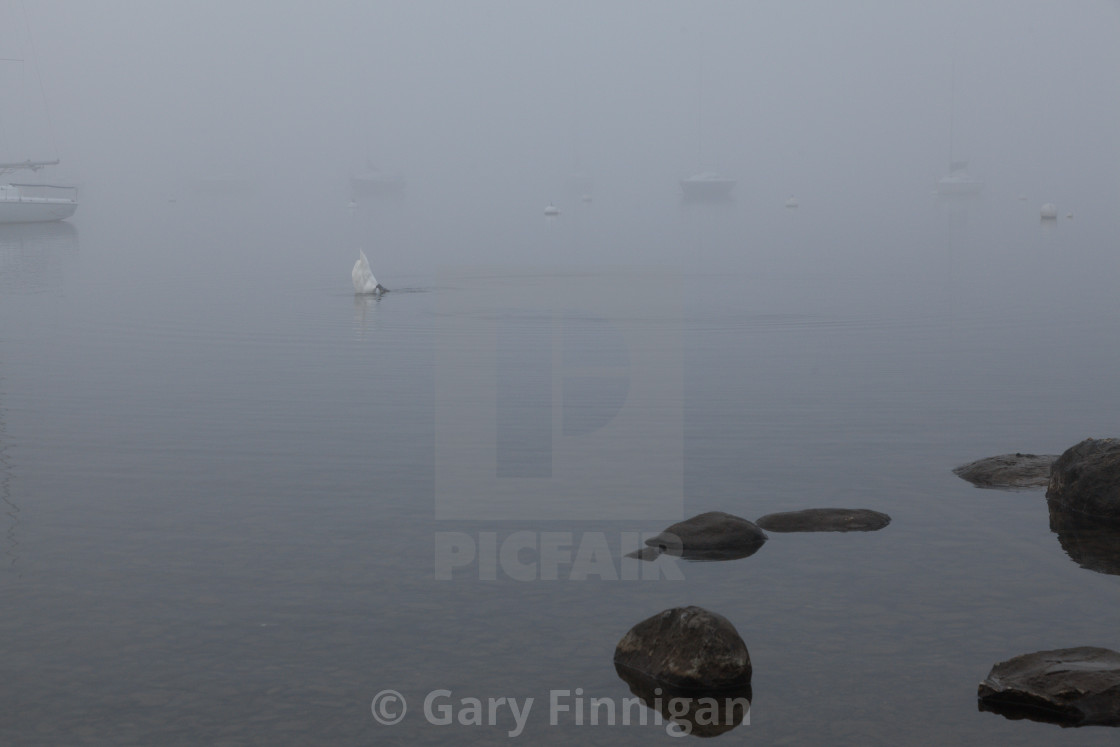 """Misty Day Series - 10 of 23"" stock image"