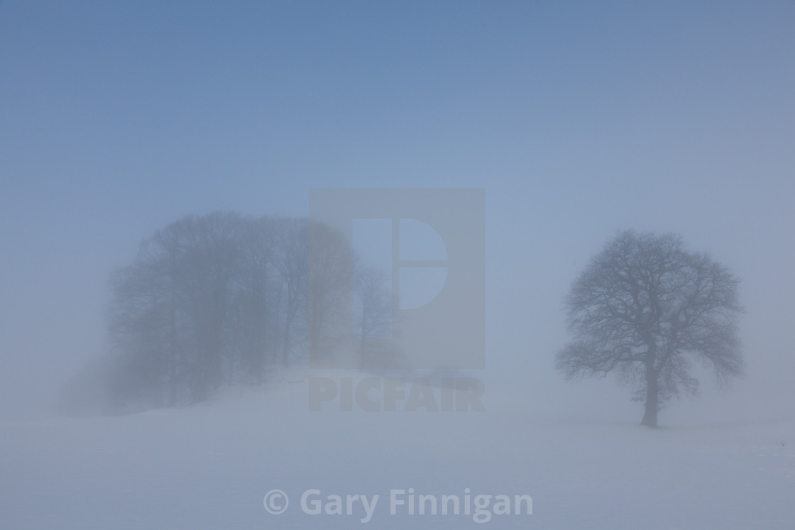 """""""Misty Day Series - 13 of 23"""" stock image"""