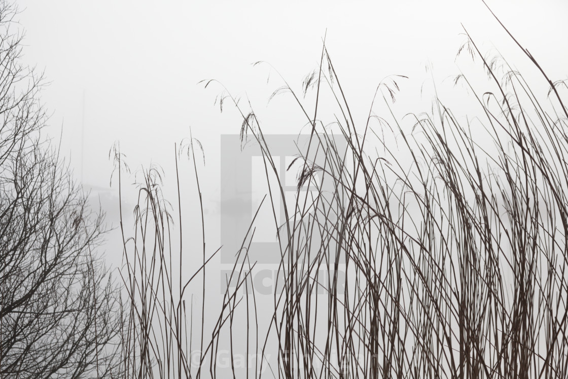 """""""Misty Day Series - 20 of 23"""" stock image"""
