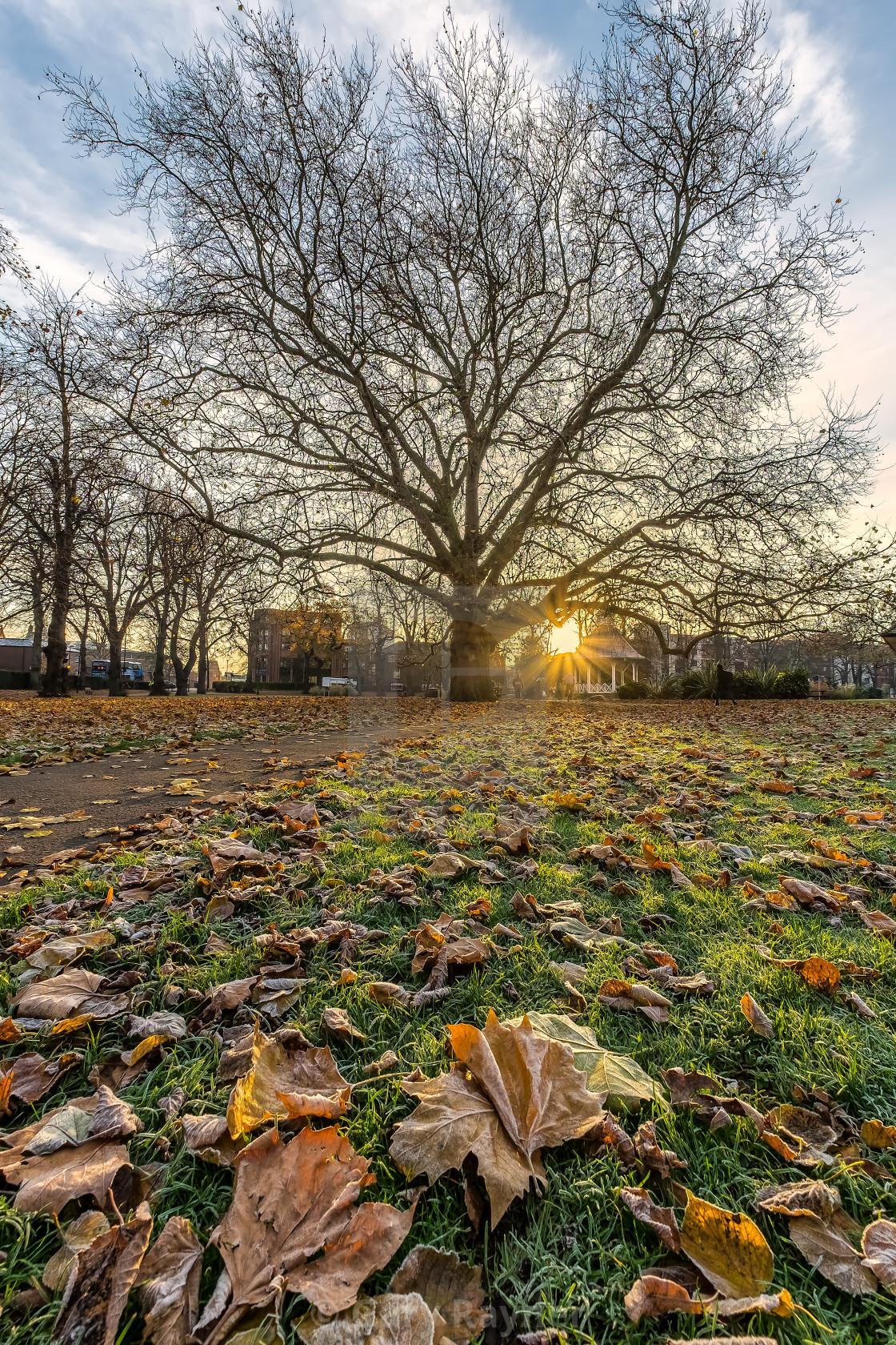 """Norwich park late Autumn"" stock image"