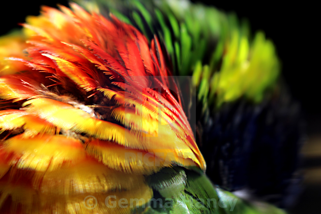 """Rainbow Feathers"" stock image"