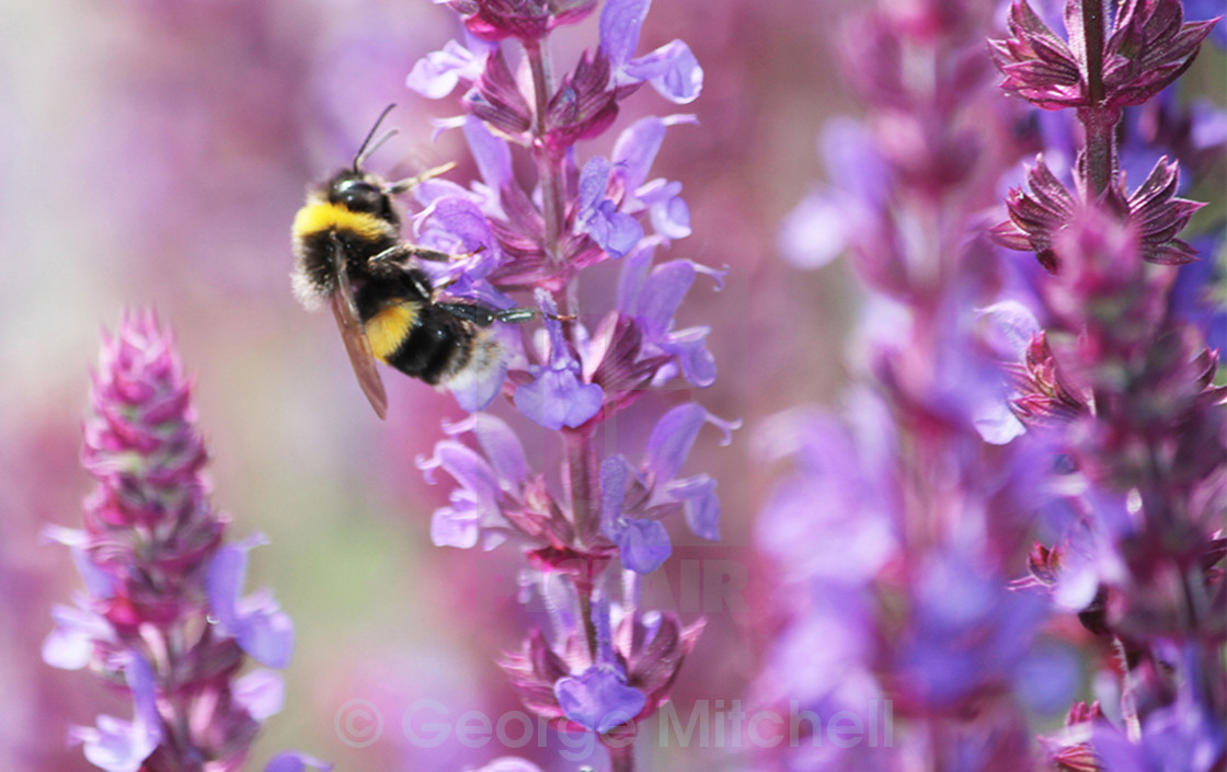 """""""Pollination taking place"""" stock image"""