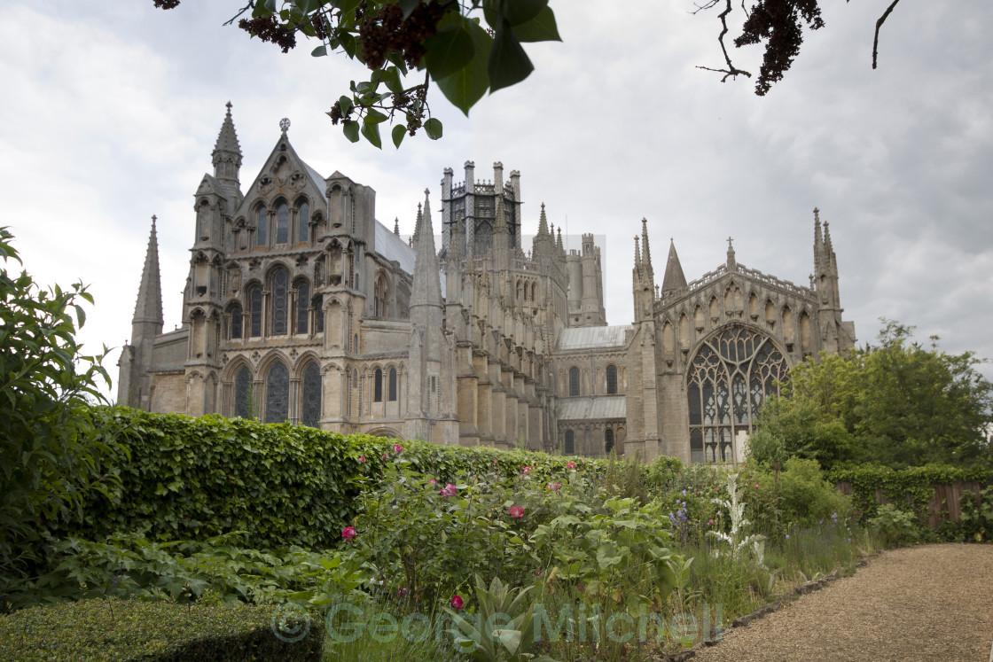 """""""Ely Cathedral, Ely, Cambridgeshire, United Kingdom"""" stock image"""