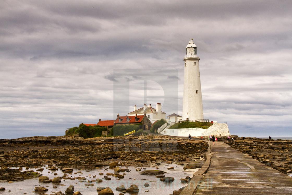 """St, Mary's Lighthouse, Northeast Coast, Northumberland, United Kingdom"" stock image"