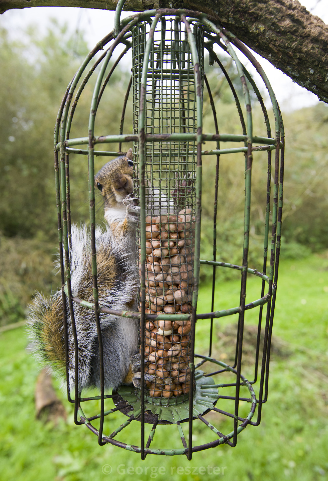 feeder bird us proof bf gone to how perky be squirrel ii pet