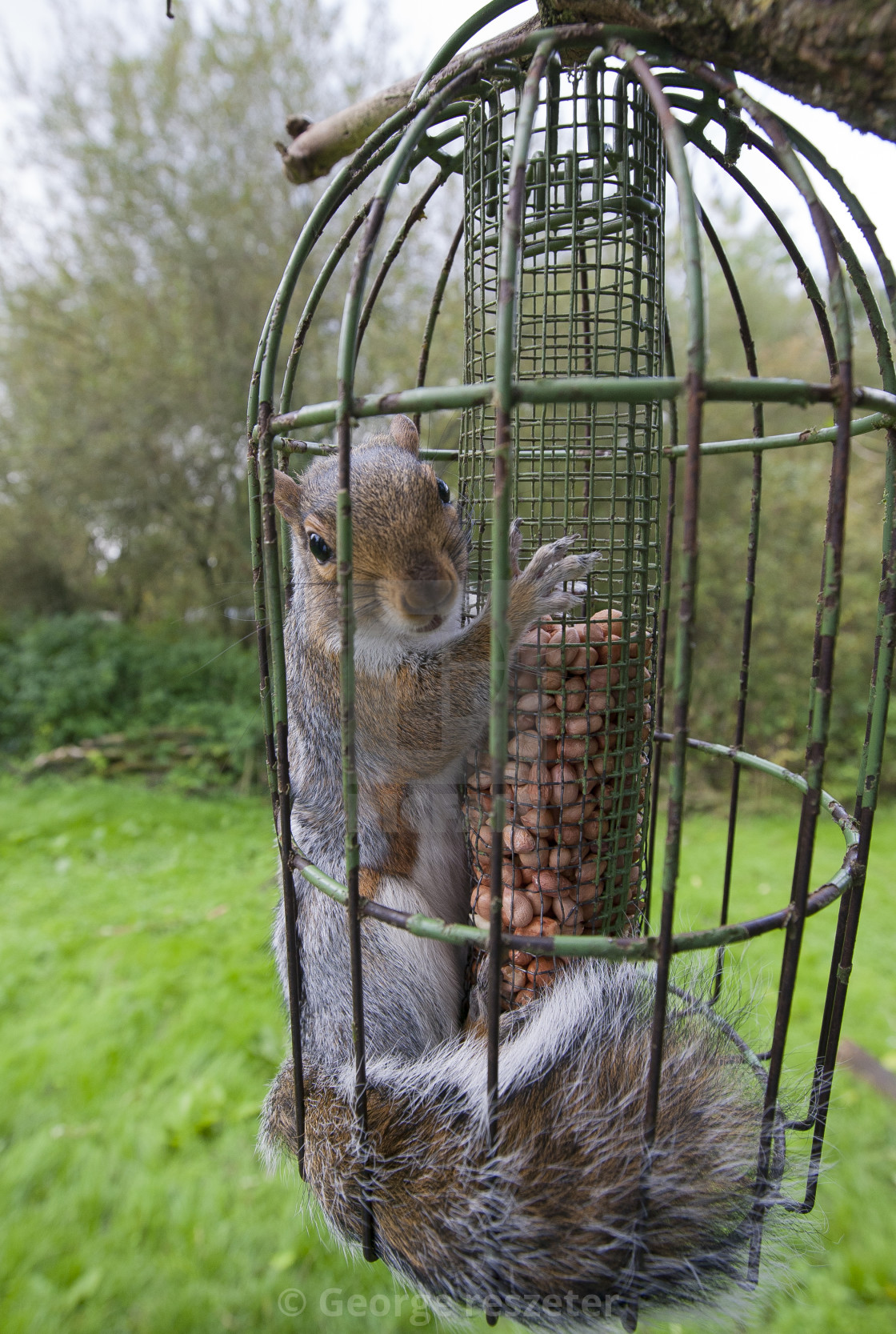 gone us be pet perky ii bf squirrel proof feeder