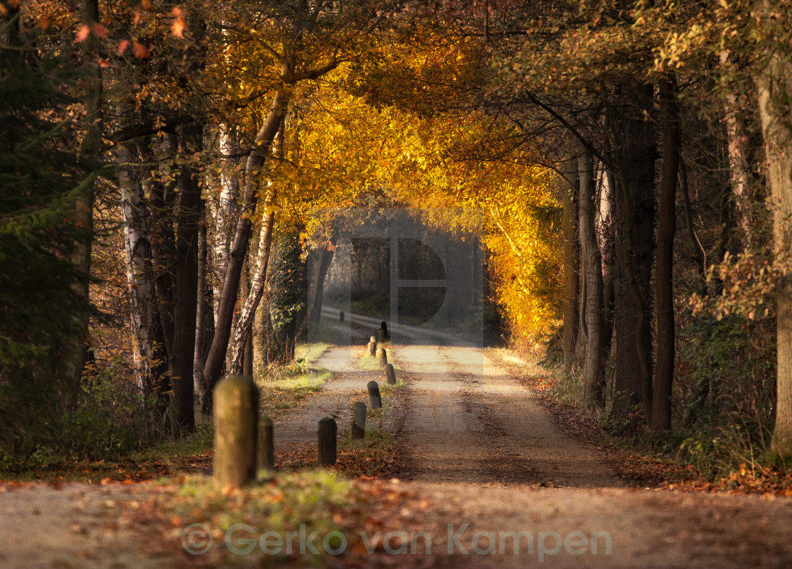"""Tunnel of Yellow"" stock image"