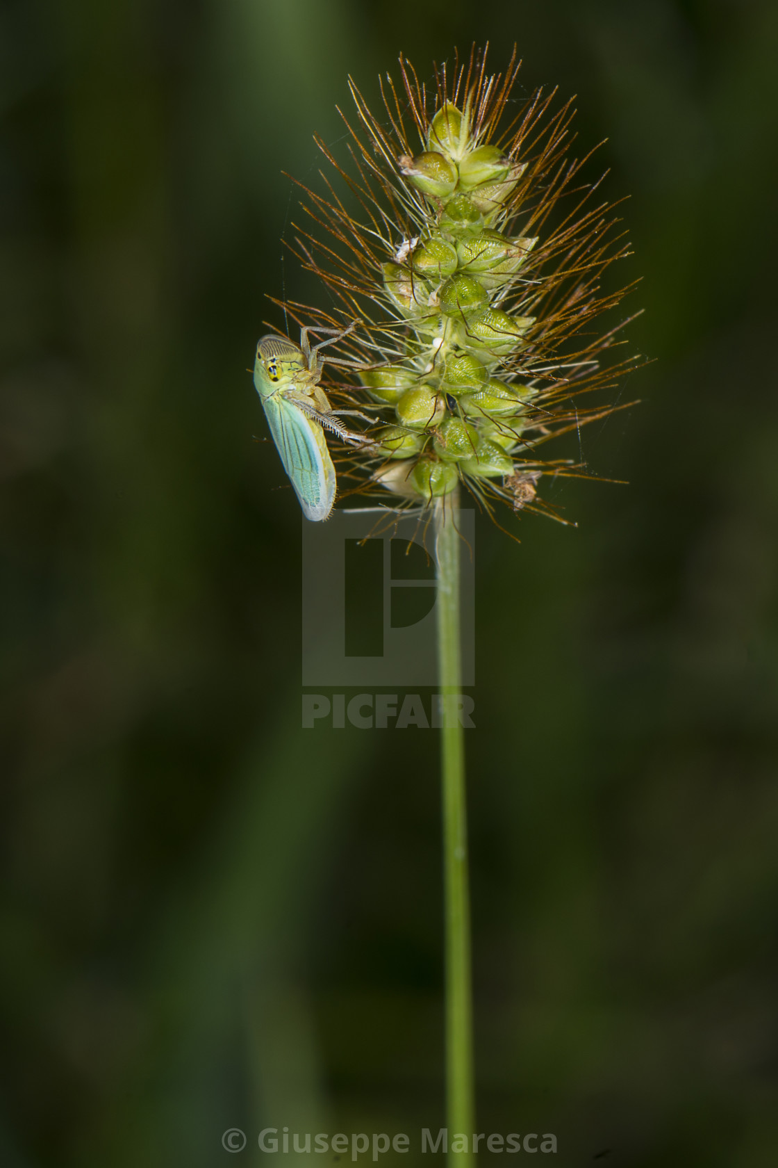"""Insect"" stock image"