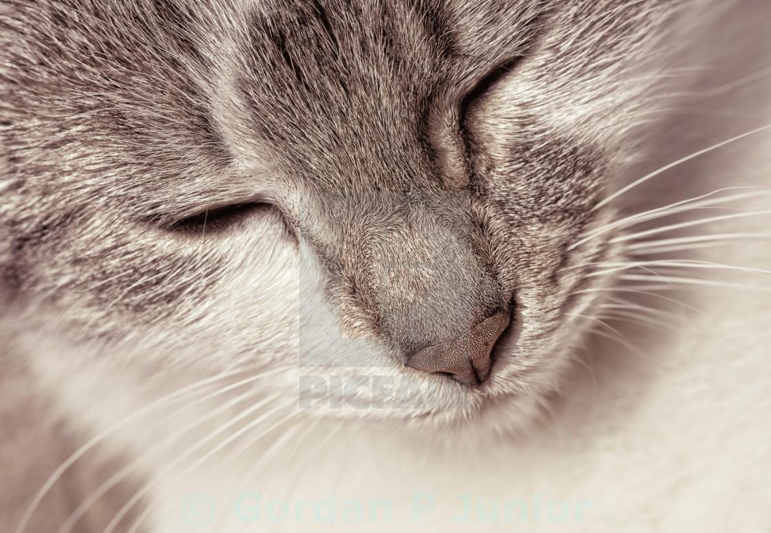 """Portrait of a happy kitten in sepia tone"" stock image"