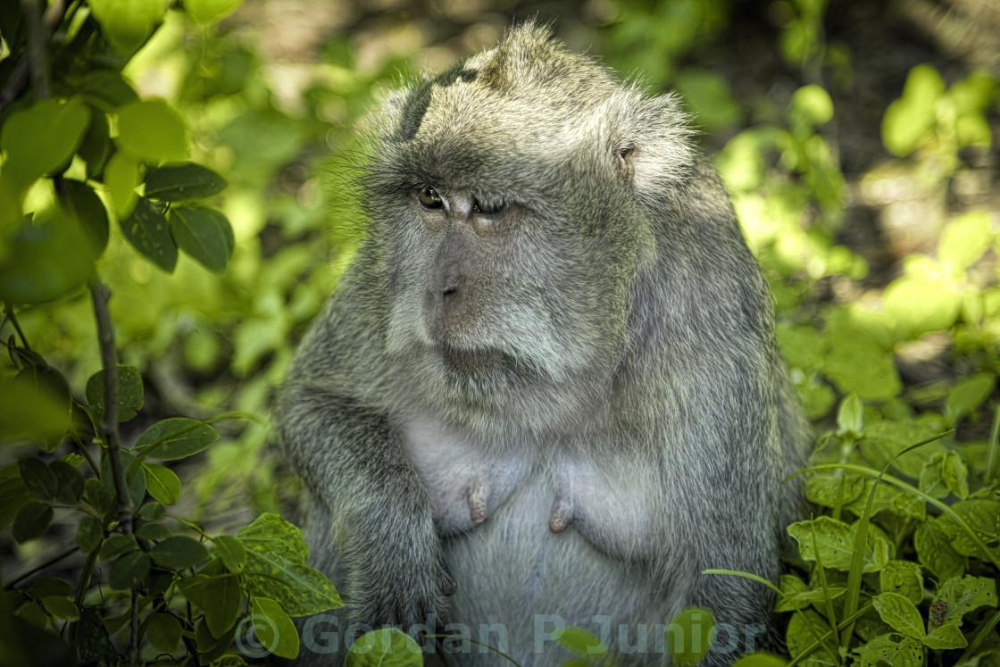 """""""Monkey on the tree"""" stock image"""
