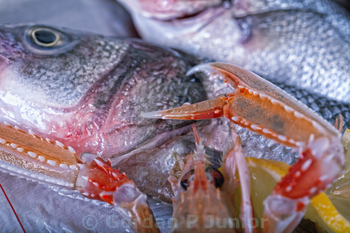 """Fresh Adriatic seafood on ice"" stock image"