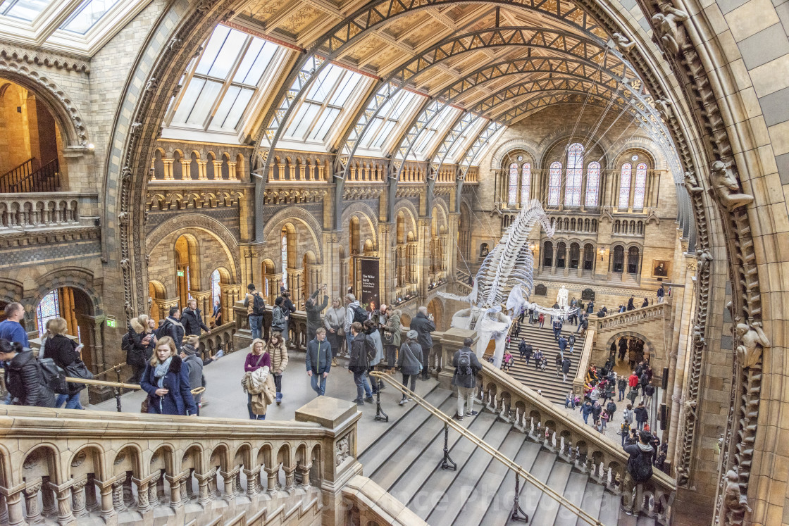 """Natural History Museum"" stock image"