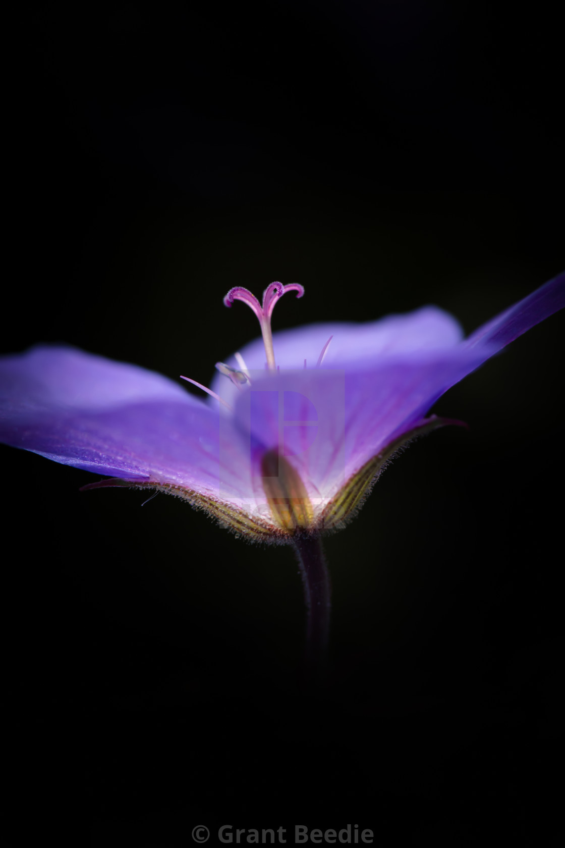 """Beautiful Macro Flower"" stock image"
