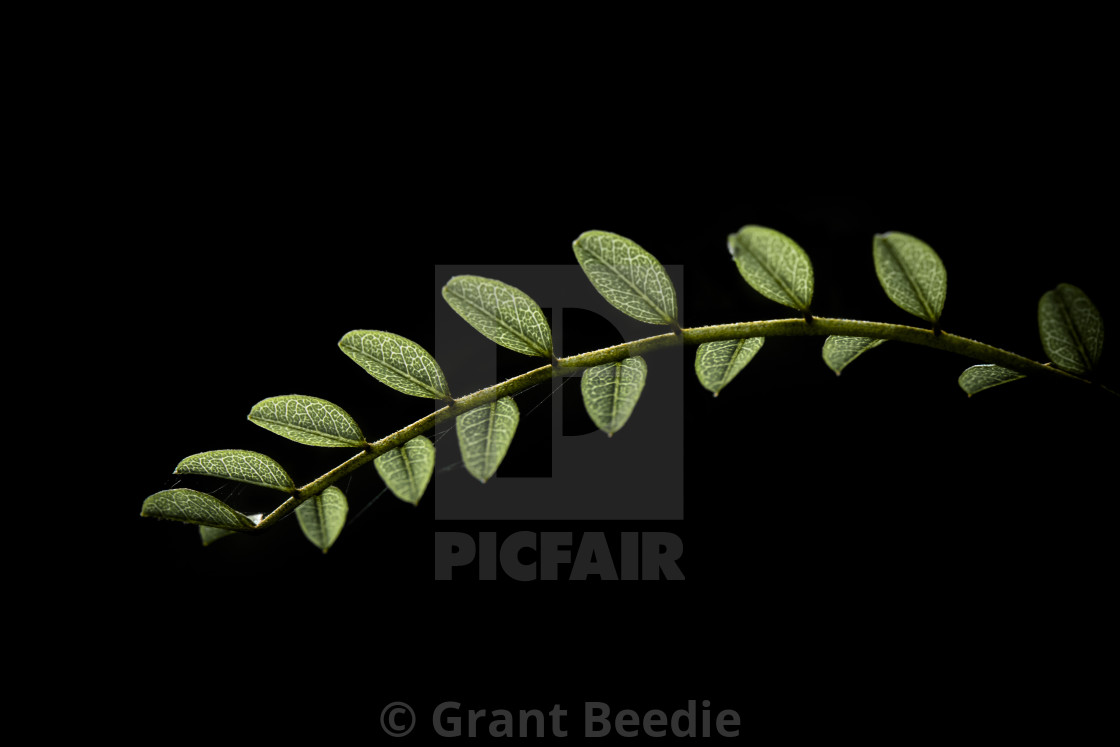 """Pretty Little Leaves"" stock image"