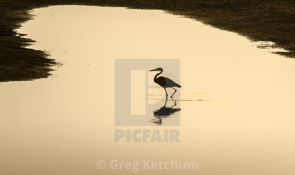 lone egret silhouette license for 12 40 on picfair
