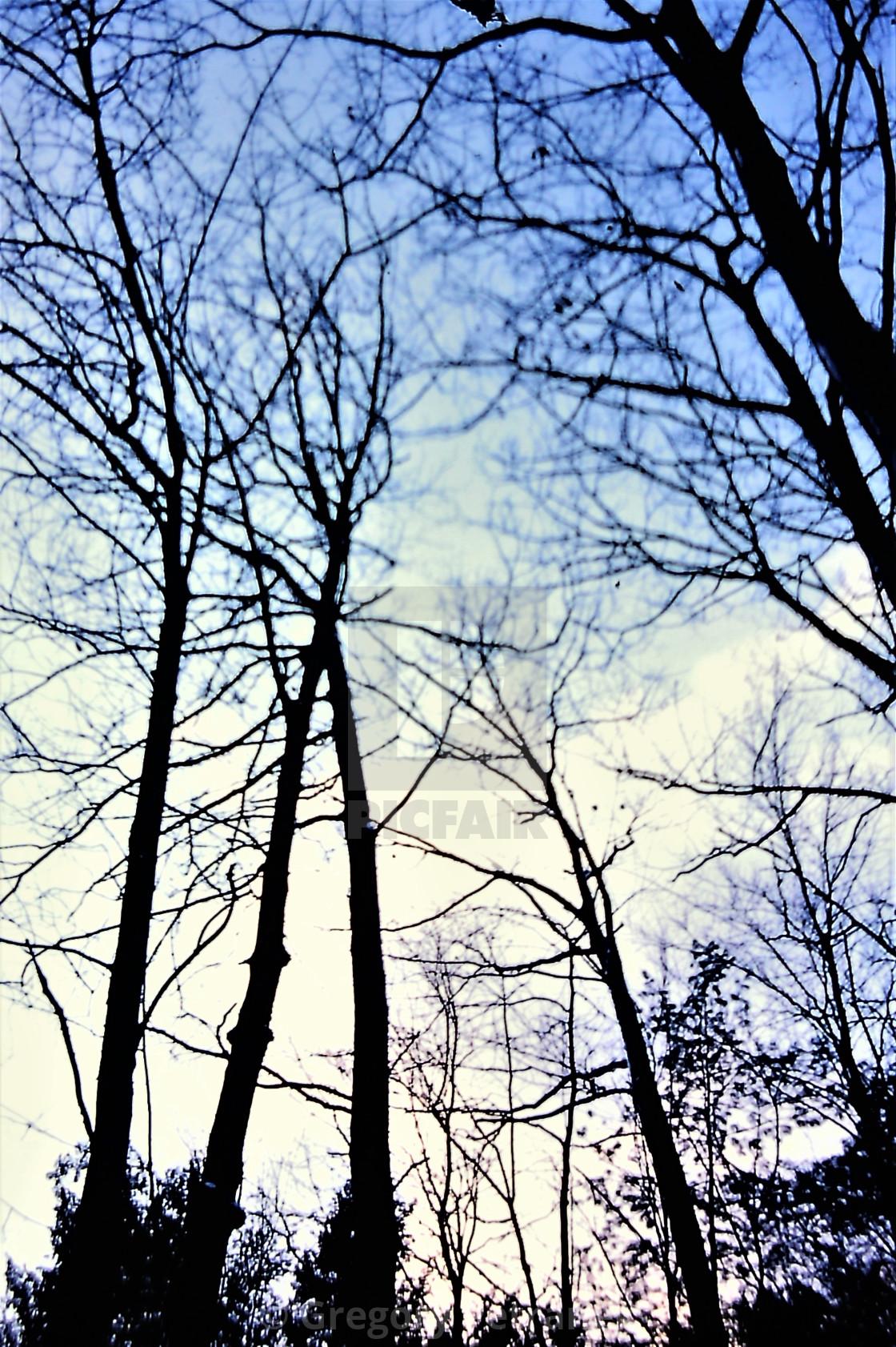 """Trees Skyview"" stock image"