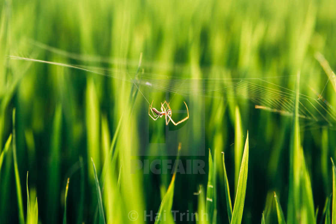 """Walking spider"" stock image"