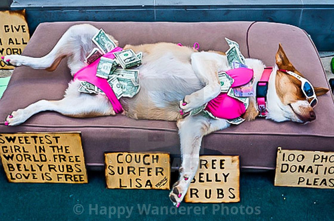 """""""Working Dog"""" stock image"""