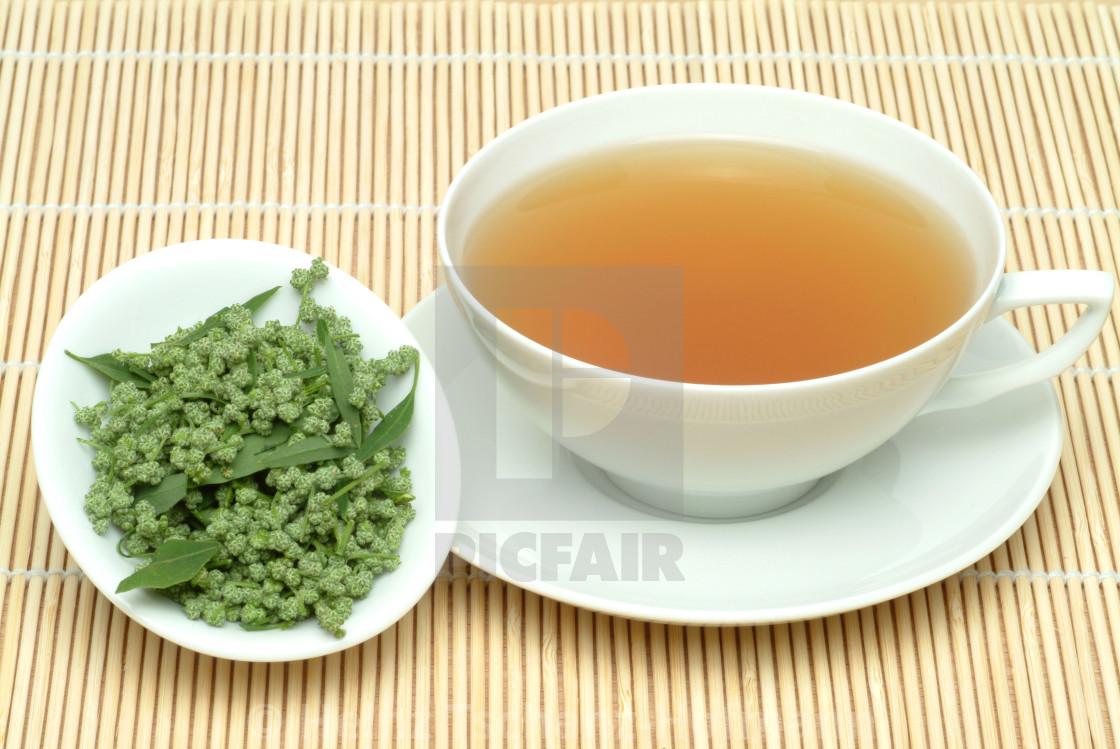 Medicinal tea made of Artemisia vulgaris, officinalis, Mugwort