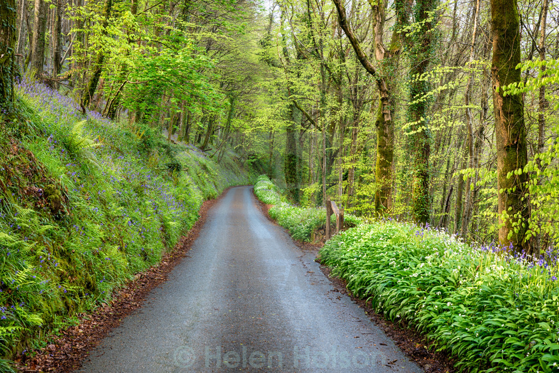 """Country Lane in Cornwall"" stock image"