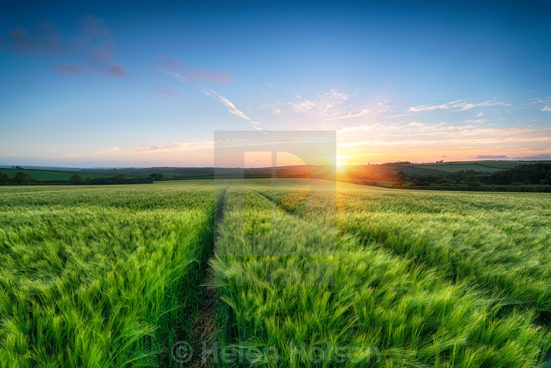 """Barley Field Sunset"" stock image"