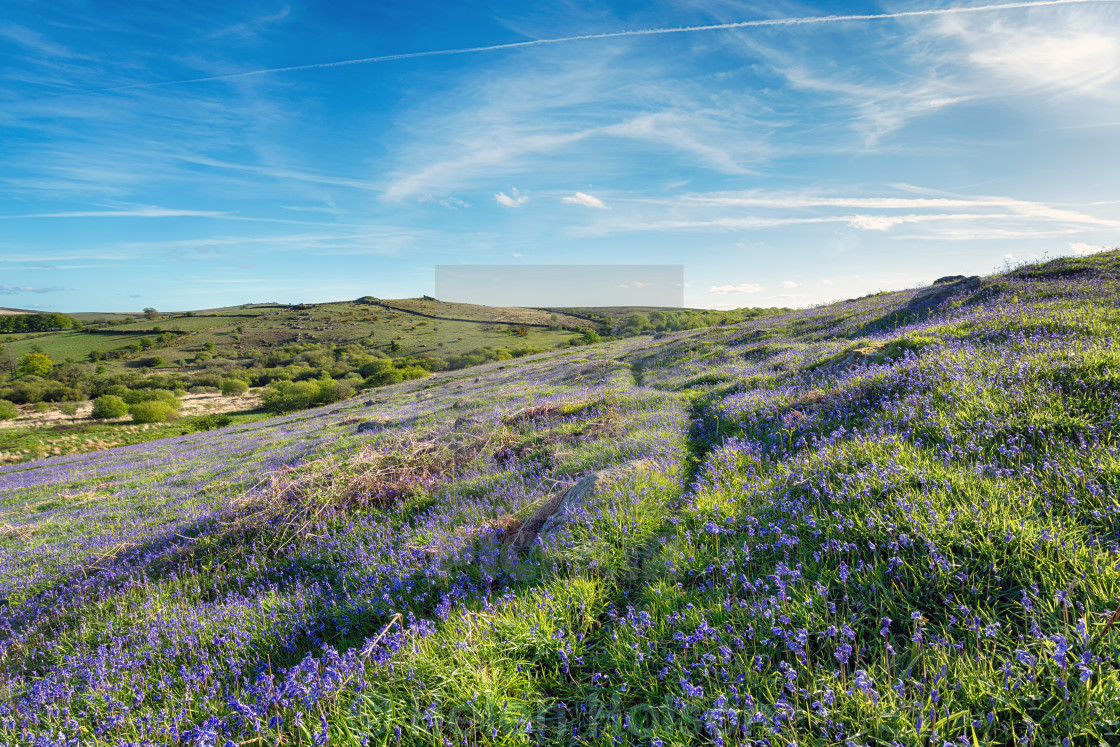 """Summer on Dartmoor"" stock image"