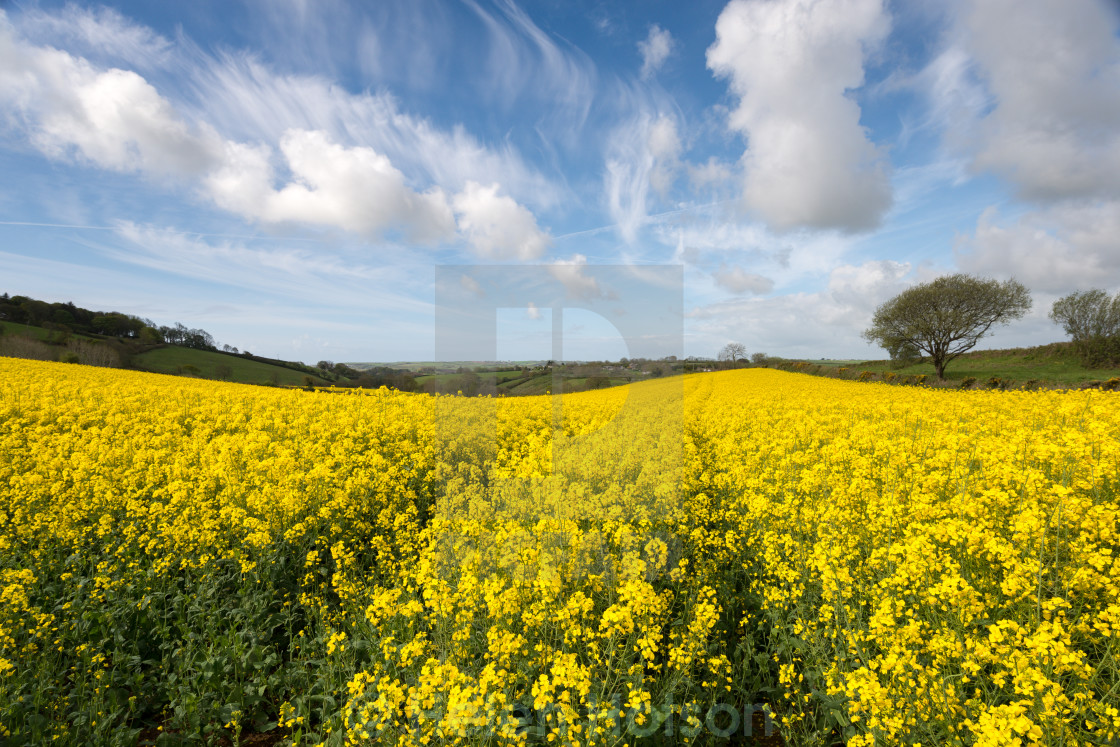 """Spring Countryside"" stock image"