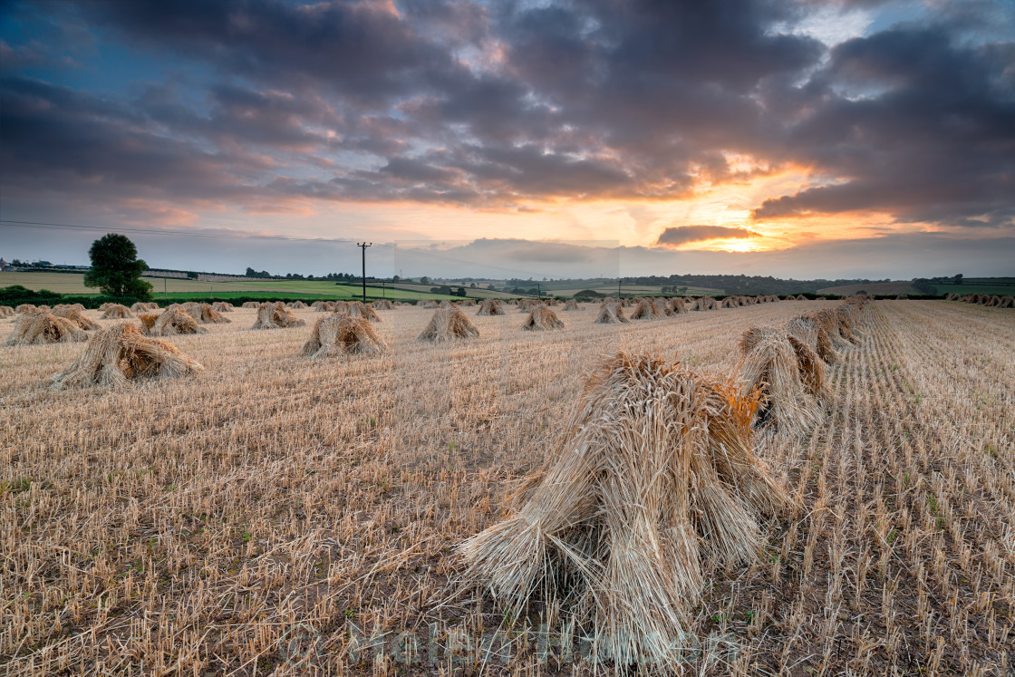 """Dramatic Harvest Sunset"" stock image"