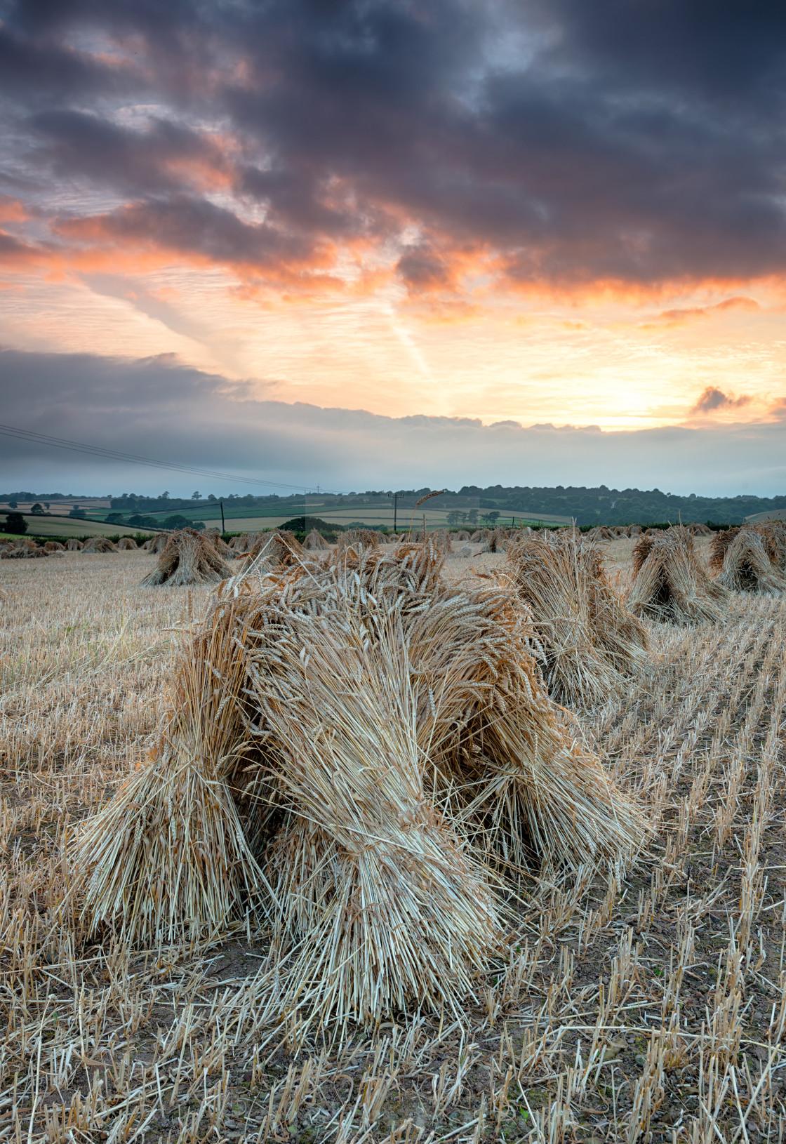 """""""Barley Stooks"""" stock image"""