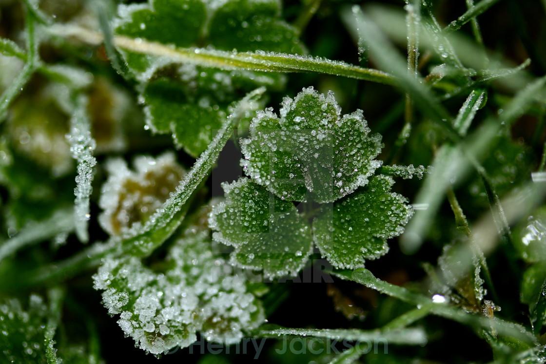 """Foliage Frost Macro"" stock image"