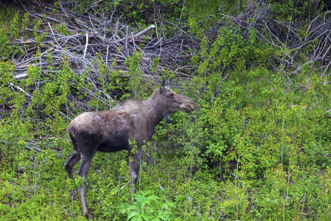 Moose Licence Nl Login
