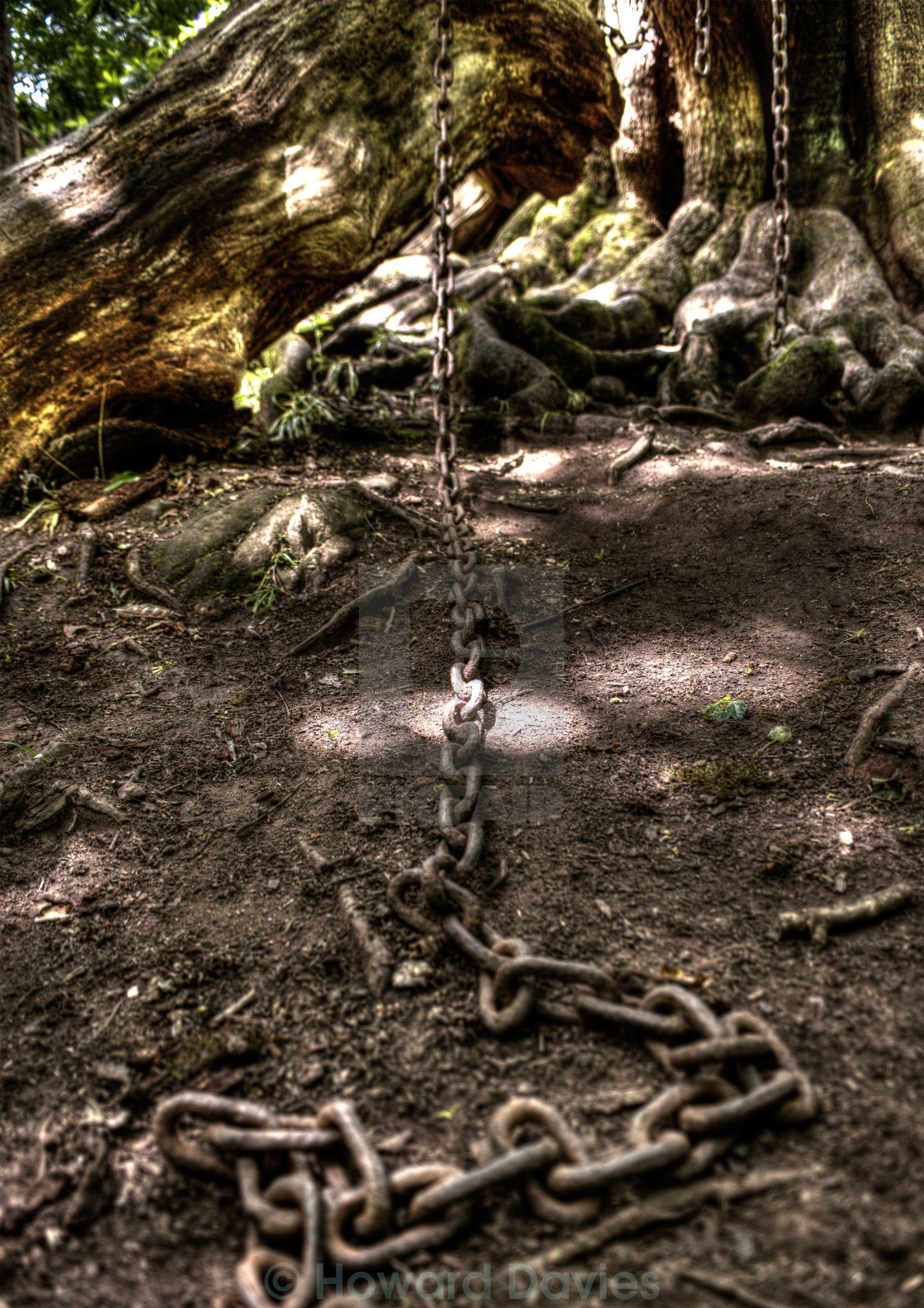 """Chained Oak"" stock image"